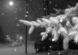 Обкладинка Перший сніг